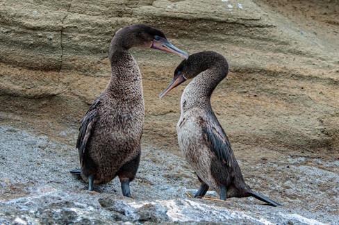 Galapagos_0023.jpg