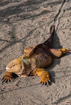 Galapagos_0021.jpg