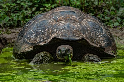 Galapagos_0020.jpg