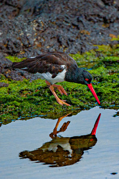 Galapagos_0003.jpg