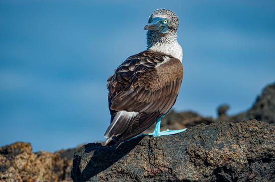 Galapagos_0001.jpg