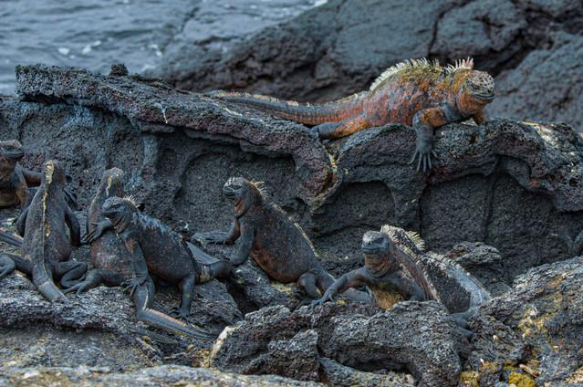 Galapagos_0018.jpg