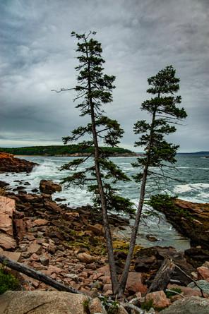 Acadia_NP_0003.jpg