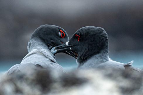 Galapagos_0010.jpg