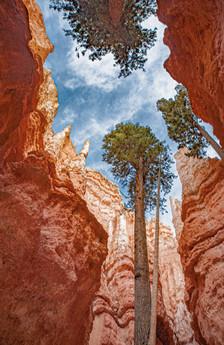 Bryce_Canyon_Navajo_Trail_0002.jpg