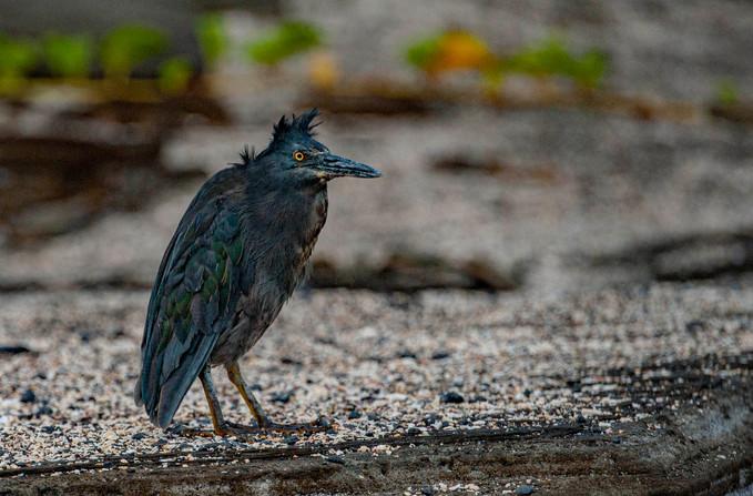 Galapagos_0004.jpg