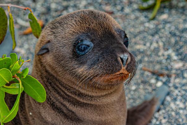 Galapagos_0025.jpg