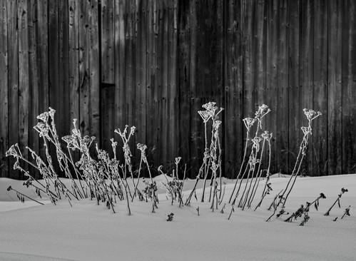 Adirondack_Park_0006.jpg