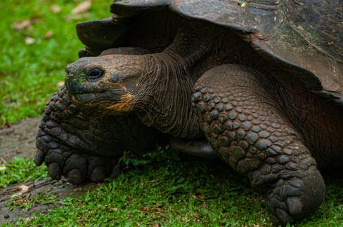 Galapagos_0019.jpg