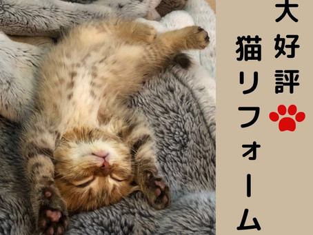 猫と暮らすリフォーム