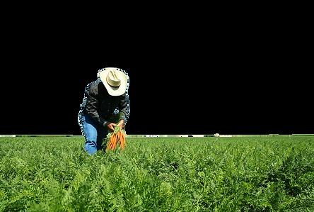 kisspng-farmer-agriculture-agronomist-fa