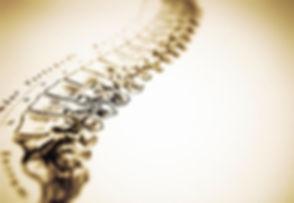 87586-colonne_vertebrale.jpg
