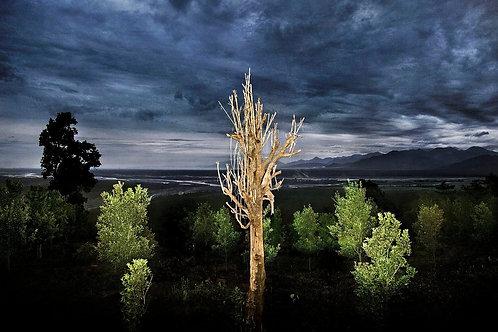 Raghu Rai Tree. India, 2013-2015