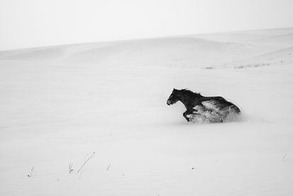 The Spirit of Mongolian Horses (4).jpg