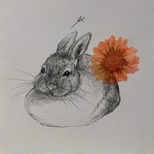 Disegno a matita (coniglio)   Pencil drawing (rabbit)