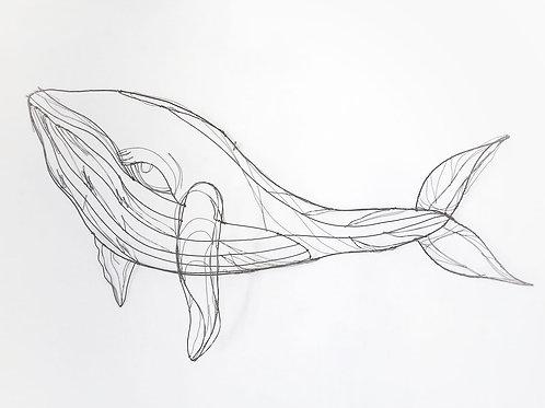 Scultura in fil di ferro (Balenottera azzurra)   Wire Sculpture (Blue Whale)