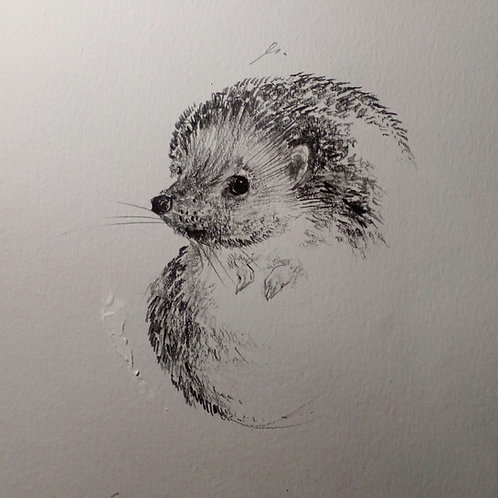 Disegno a matita (porcospino)   Pencil drawing (hedgehog)