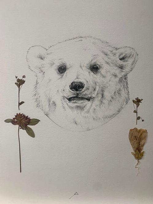 Disegno a matita (orso bianco) | Pencil drawing (polar bear)