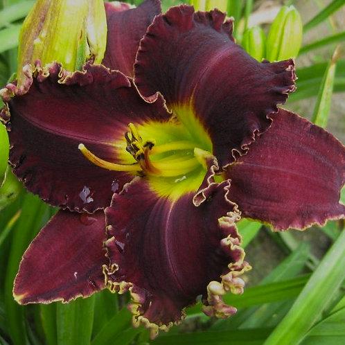 Victorian Garden Star Bright (1)