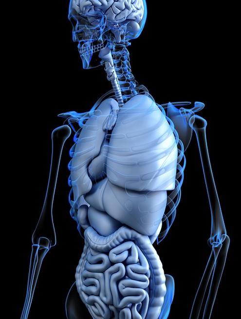 single skeleton.png