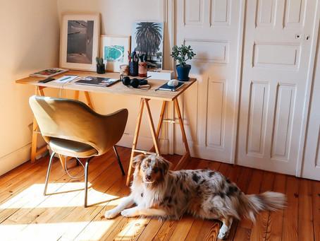 Fin des vacances et du télé-travail: Comment préparer votre chien?