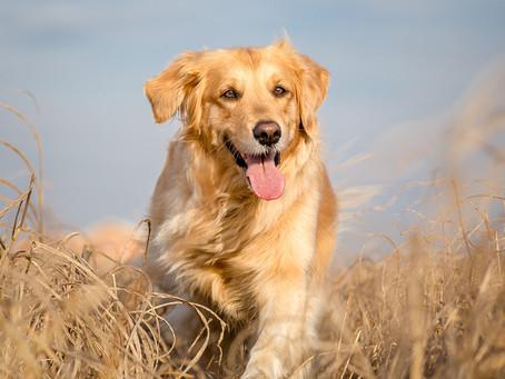 5 façons de garder votre chien heureux et en bonne santé