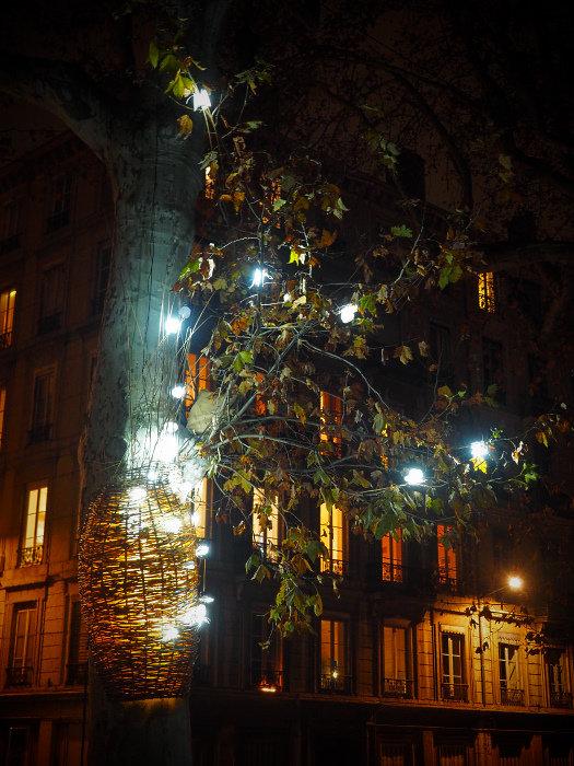 luciole01.jpg