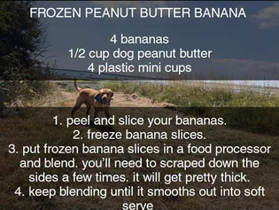 Summer Snacking For your Doggie !