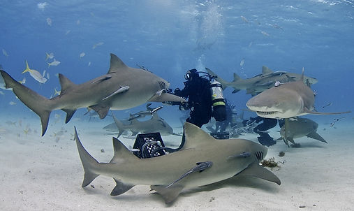 Lee DuCote and Alicia DuCote go shark diving on the streaming tv show Adventure and Romance.