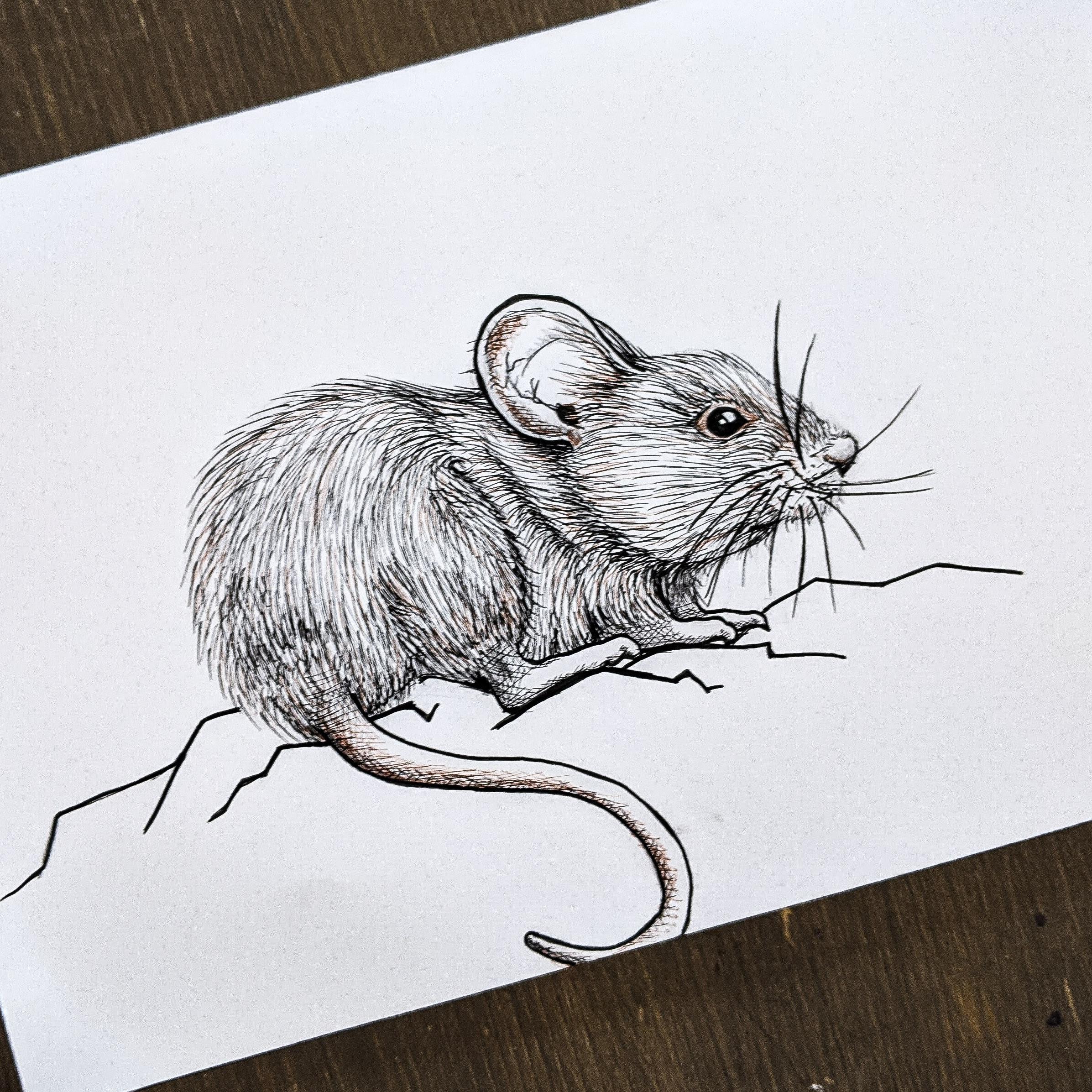 Inktober Rodent