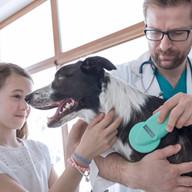 Vétérinaire examen chien