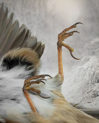bird feet.jpg