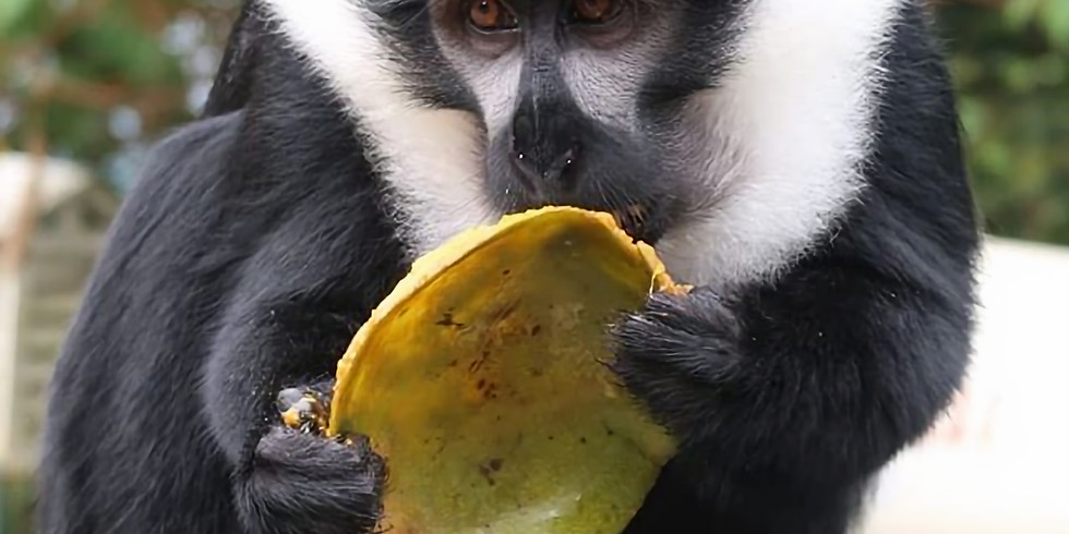 A three-day primate safari in Nyungwe National Park