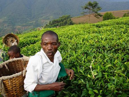 The blessed hills of Rwanda