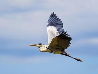Bird on a Plane