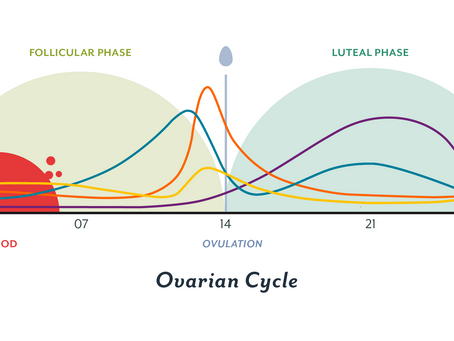 The Waves of our Nutrition Cycle