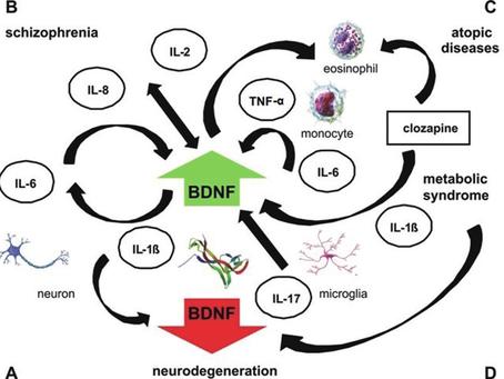 Brain-derived Neurotrophic Factor (BDNF)