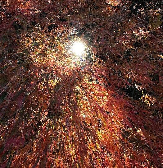 Beautiful windy fall morning_#japanesema