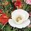 Thumbnail: Indian Poppy- Papaver rhoeas