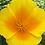 Thumbnail: California Poppy - Eschscholzia Californica Mix