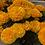Thumbnail: Marigold African Hawaii Orange