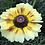 Thumbnail: Chrysanthemum carinatum Mix NM