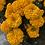 Thumbnail: Marigold Double Dwarf F2 Orange NM