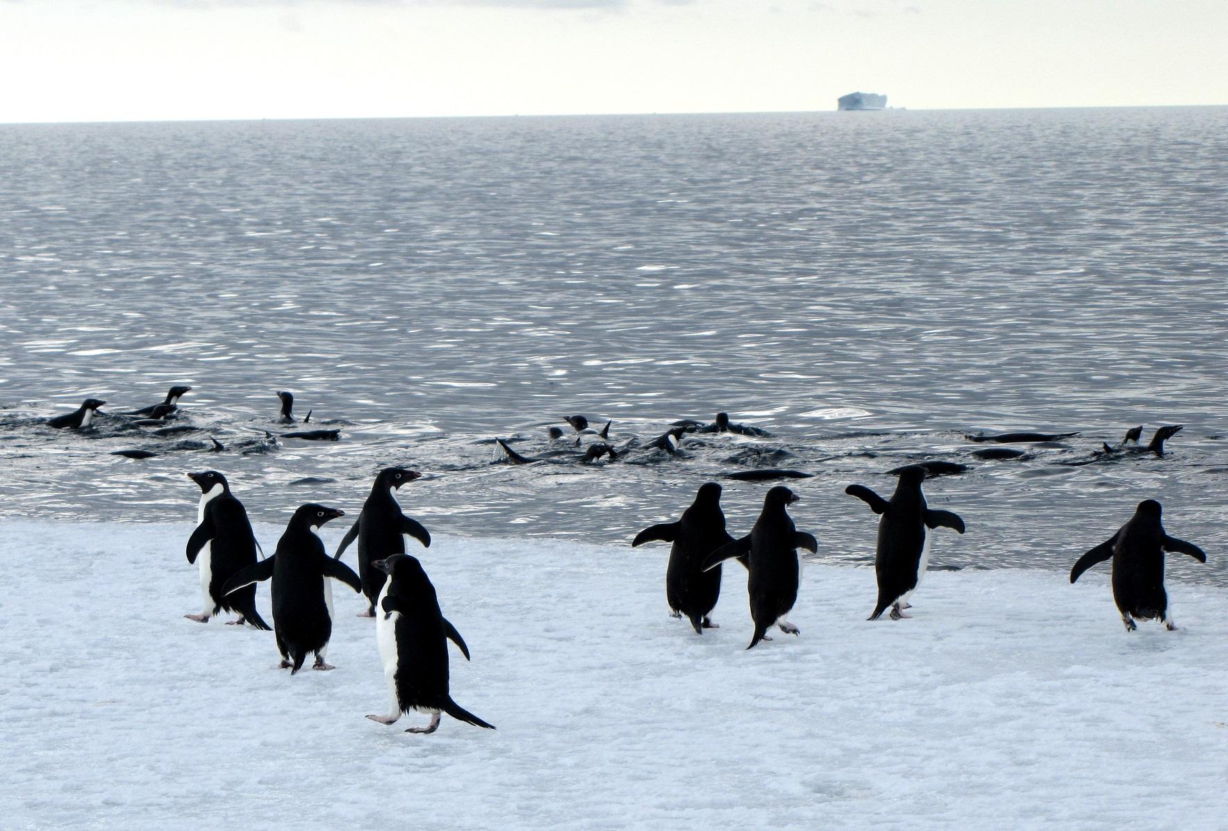 McQuaidAlelie penguins.jpg