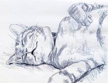 Patz sleeps