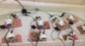 Respirometers.jpg