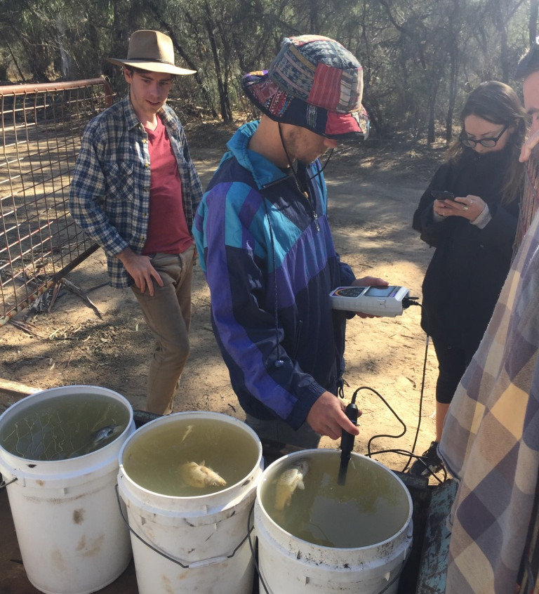 Measuring oxygen in carp experiments