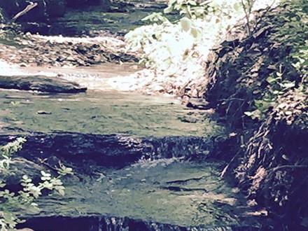 Blue Springs Creek