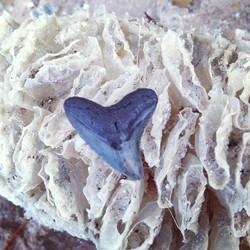 Shark tooth found on beach