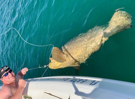 Goliath of a fish